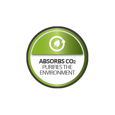 Absorbs CO2. Purifies the environment